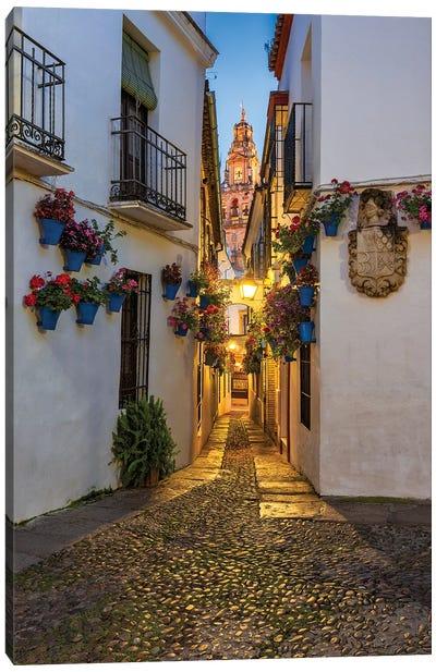 Between Flowerpots (Córdoba, Spain) Canvas Art Print