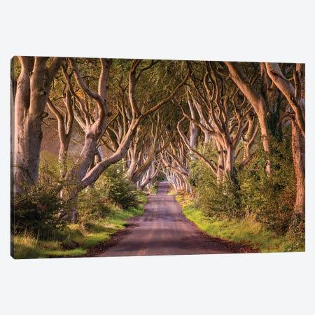 Enchanted Road (Dark Hedges, Northern Ireland) Canvas Print #CNS38} by Chano Sánchez Canvas Artwork