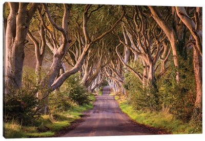 Enchanted Road (Dark Hedges, Northern Ireland) Canvas Art Print