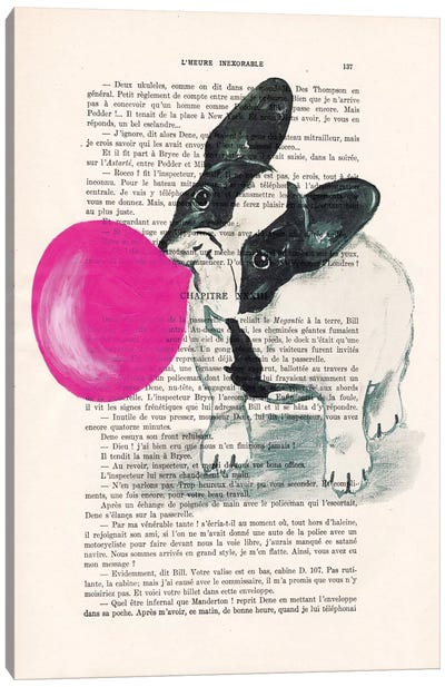 Vintage Paper Series: French Bulldog With Bubblegum Canvas Print #COC100