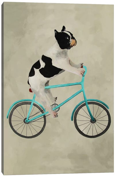 Bulldog On Bicycle Canvas Art Print