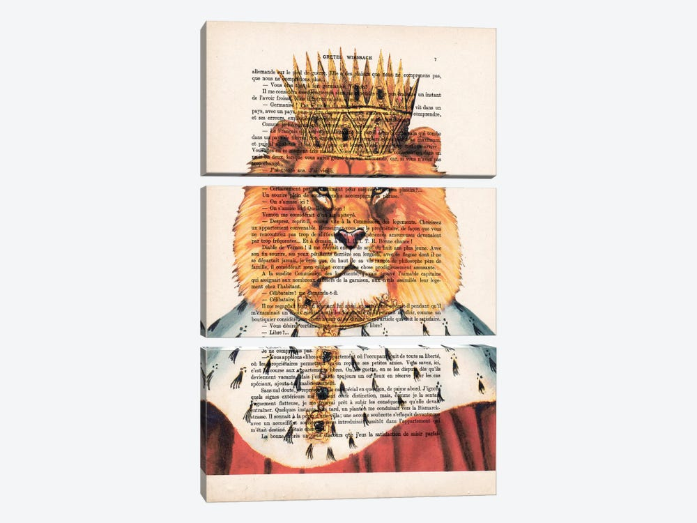 Lion King by Coco de Paris 3-piece Canvas Wall Art