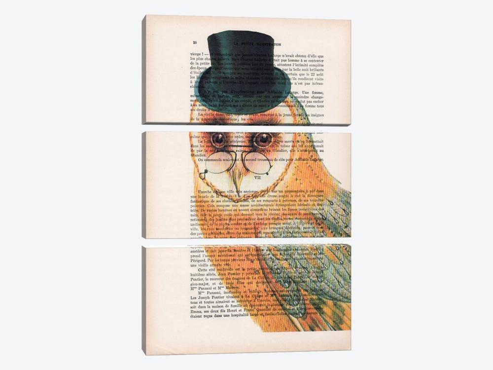 Owl Wit Hat by Coco de Paris 3-piece Canvas Art Print