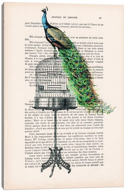 Peacock On Birdcage Canvas Art Print