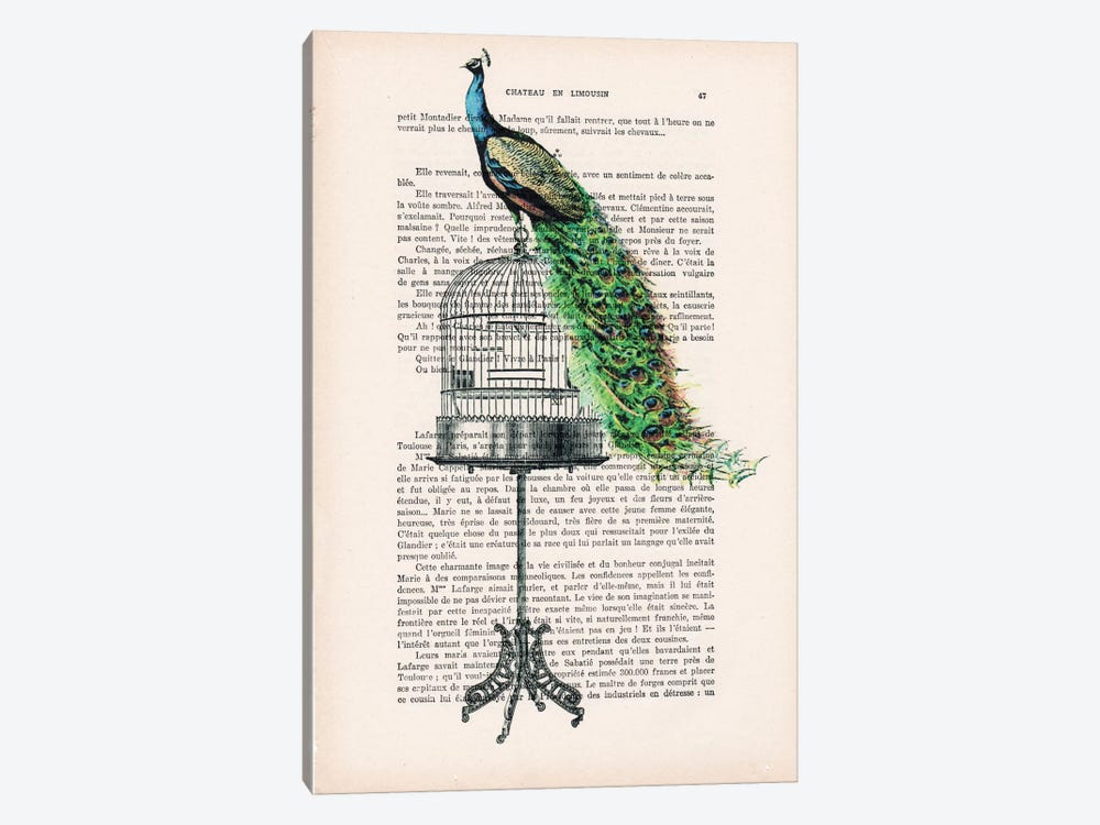 Peacock On Birdcage by Coco de Paris 1-piece Canvas Print