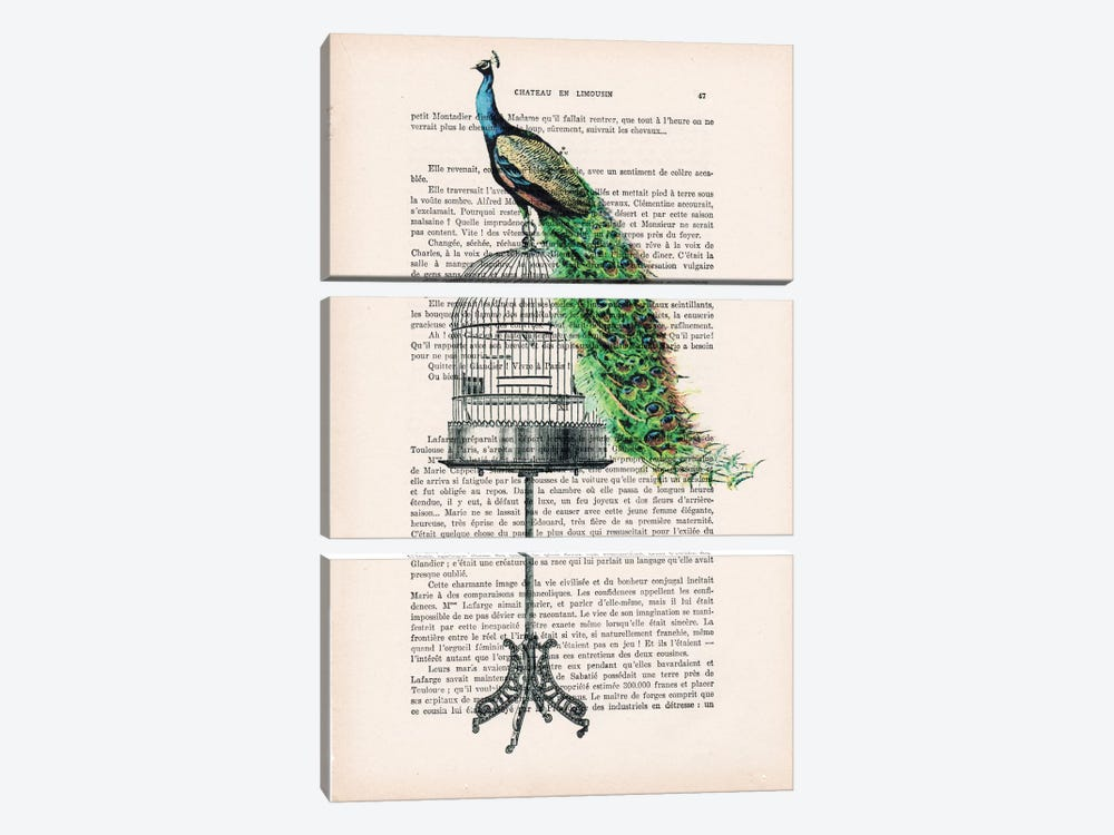 Peacock On Birdcage by Coco de Paris 3-piece Canvas Art Print