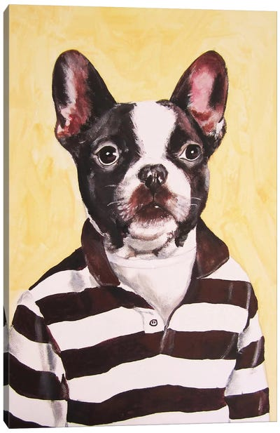 Bulldog With Stripy Shirt Canvas Art Print
