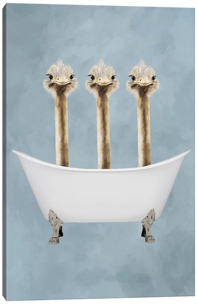 Ostriches In Bathtub Canvas Art Print