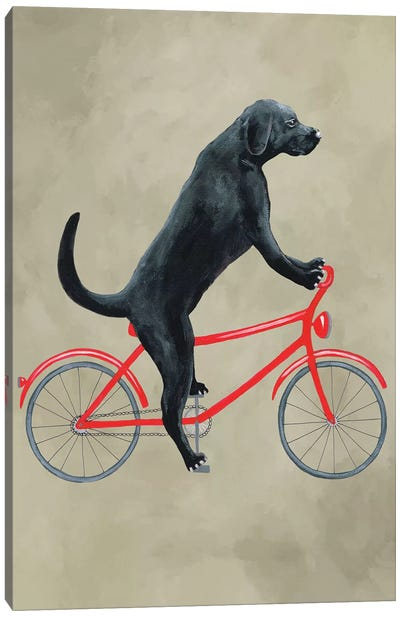 Black Labrador On Bicycle Canvas Art Print
