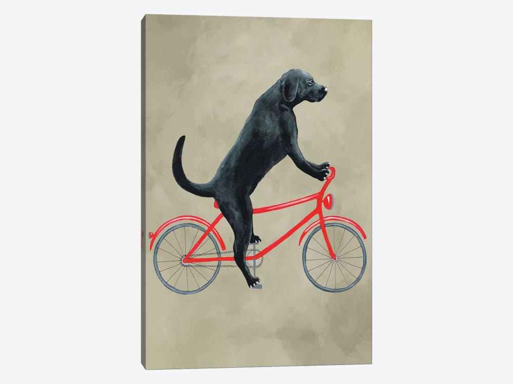 Black Labrador On Bicycle by Coco de paris 1-piece Art Print