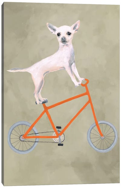 Chihuahua On Bicycle Canvas Art Print