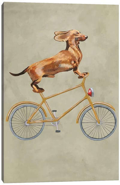 Dachshund On Bicycle I Canvas Art Print