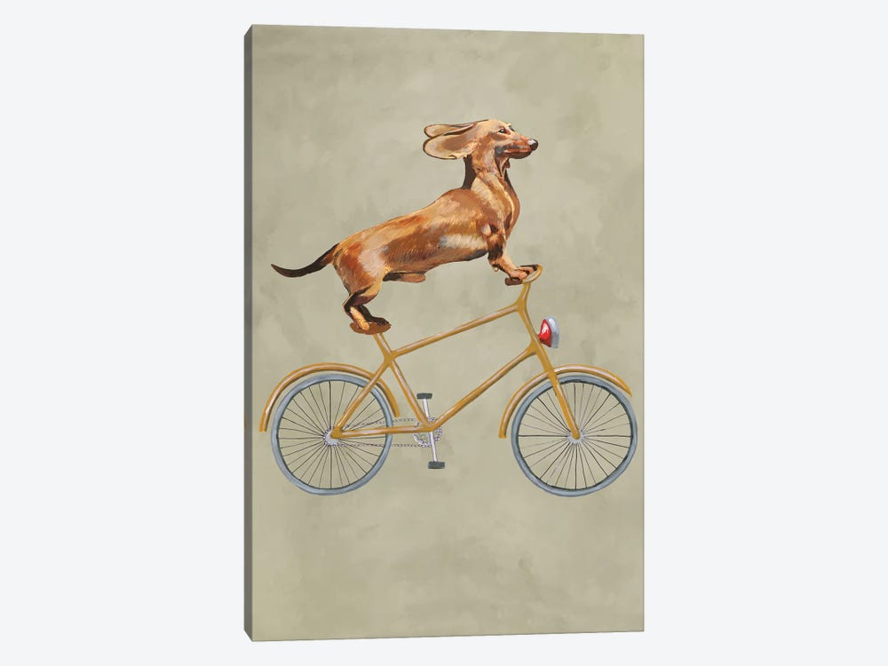 Dachshund On Bicycle I by Coco de Paris 1-piece Art Print