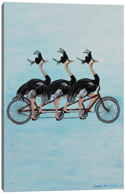Ostriches On Bicycle Canvas Art Print
