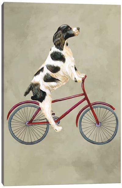English Springer On Bicycle Canvas Art Print