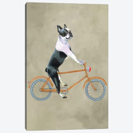 Boston Terrier On Bicycle Canvas Print #COC4} by Coco de Paris Canvas Art