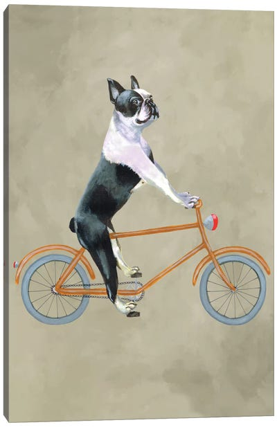 Boston Terrier On Bicycle Canvas Art Print