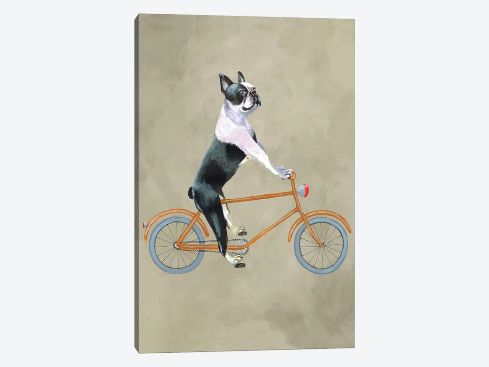 Boston Terrier On Bicycle by Coco de Paris 1-piece Canvas Wall Art