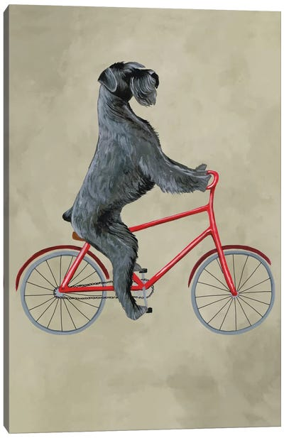 Schnauzer On Bicycle Canvas Print #COC70