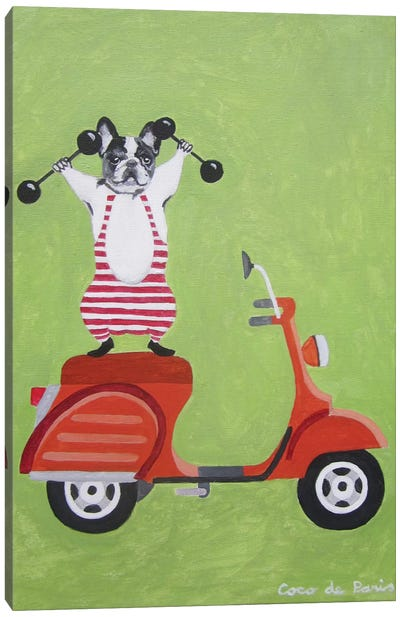 Sporty Bulldog On Vespa Canvas Art Print