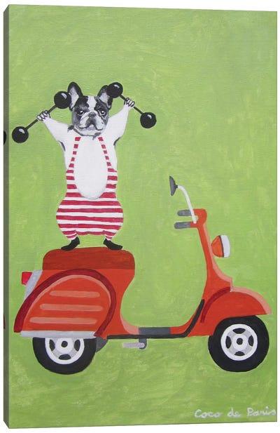 Sporty Bulldog On Vespa Canvas Print #COC74