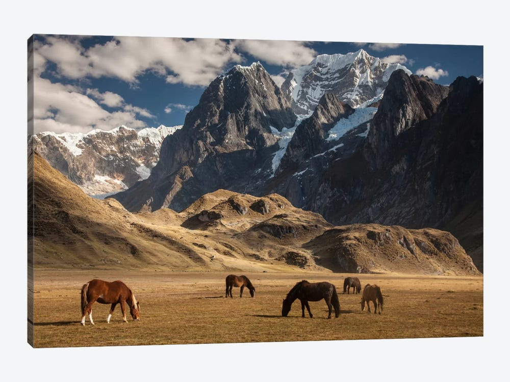 Domestic Horse Herd Grazing Under Siula Grande Near Carhuacocha Lake, Cordillera Huayhuash, Andes, Peru by Colin Monteath 1-piece Canvas Art