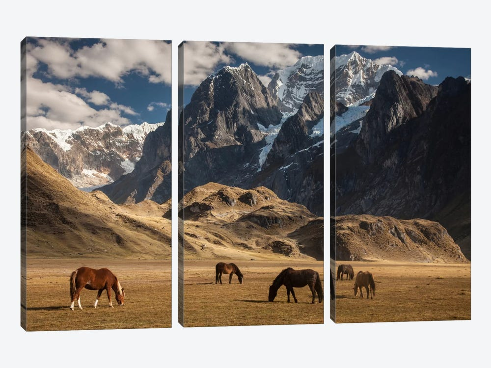 Domestic Horse Herd Grazing Under Siula Grande Near Carhuacocha Lake, Cordillera Huayhuash, Andes, Peru by Colin Monteath 3-piece Canvas Art