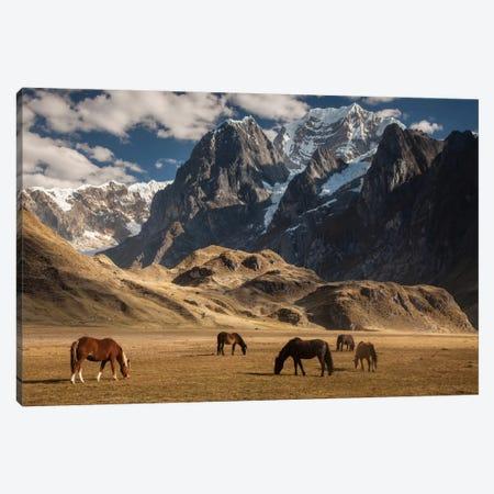 Domestic Horse Herd Grazing Under Siula Grande Near Carhuacocha Lake, Cordillera Huayhuash, Andes, Peru Canvas Print #COL13} by Colin Monteath Canvas Art