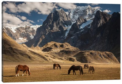 Domestic Horse Herd Grazing Under Siula Grande Near Carhuacocha Lake, Cordillera Huayhuash, Andes, Peru Canvas Art Print