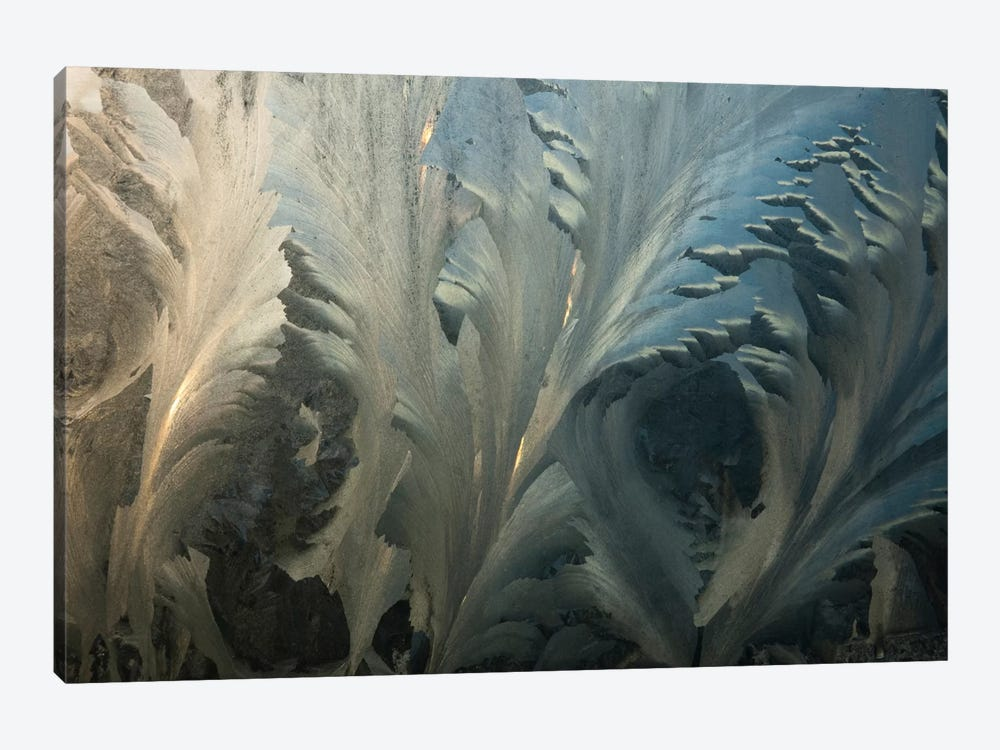 Frost Crystal Patterns On Glass, Ross Sea, Antarctica I by Colin Monteath 1-piece Canvas Print