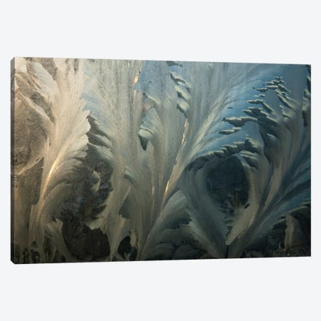 Frost Crystal Patterns On Glass, Ross Sea, Antarctica I 3-Piece Canvas #COL16} by Colin Monteath Canvas Art Print