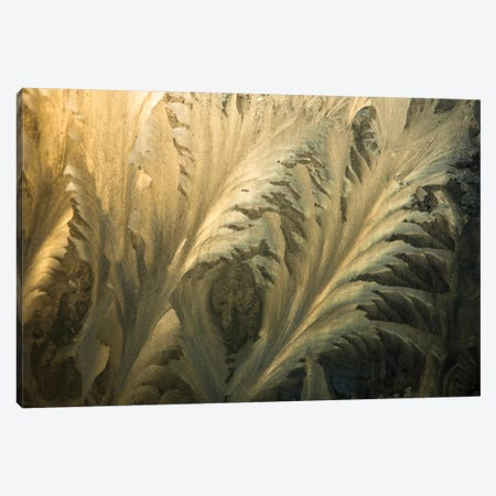 Frost Crystal Patterns On Glass, Ross Sea, Antarctica II Canvas Print #COL17} by Colin Monteath Canvas Art Print