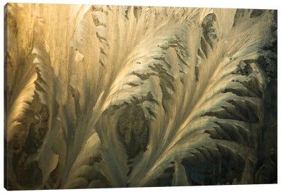 Frost Crystal Patterns On Glass, Ross Sea, Antarctica II Canvas Art Print
