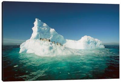 Adelie Penguin Group Riding Sculpted Iceberg, Terre Adelie Land, East Antarctica Canvas Art Print