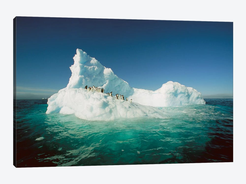Adelie Penguin Group Riding Sculpted Iceberg, Terre Adelie Land, East Antarctica by Colin Monteath 1-piece Canvas Art Print