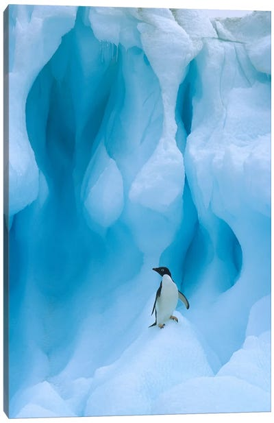 Adelie Penguin On Iceberg, South Shetland Islands, Antarctica Peninsula, Antarctica Canvas Art Print
