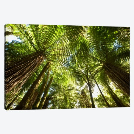 Tree Fern Forest Near Haast Pass, New Zealand Canvas Print #COL48} by Colin Monteath Art Print
