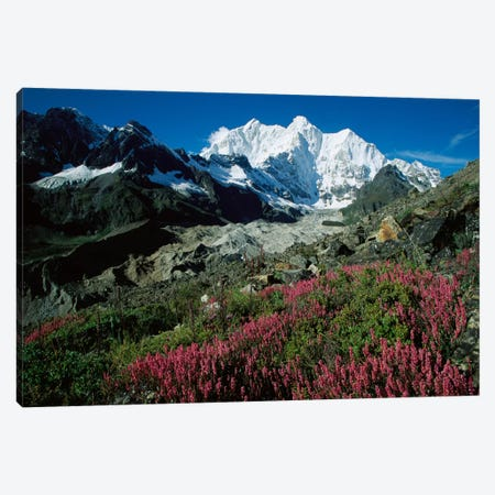 Wildflowers Growing On Moraine Terrace Beside Kangshung Glacier, With Mt Chomolonzo In Background, East Of Mt Everest, Tibet Canvas Print #COL52} by Colin Monteath Canvas Artwork
