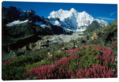Wildflowers Growing On Moraine Terrace Beside Kangshung Glacier, With Mt Chomolonzo In Background, East Of Mt Everest, Tibet Canvas Art Print