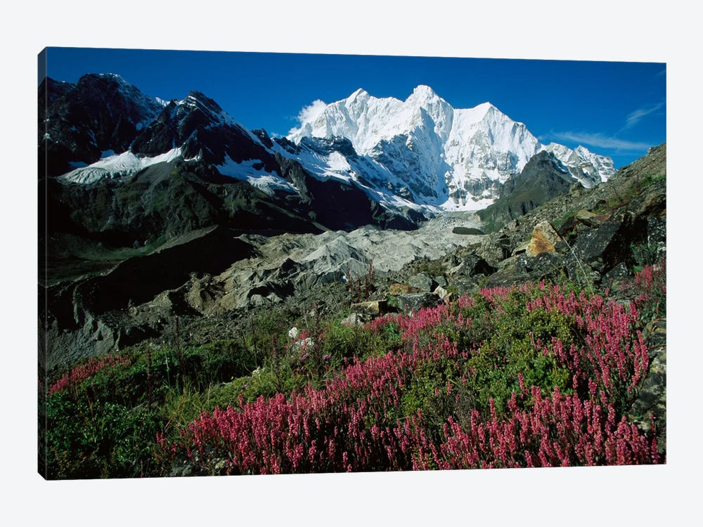 Wildflowers Growing On Moraine Terrace Beside Kangshung Glacier, With Mt Chomolonzo In Background, East Of Mt Everest, Tibet by Colin Monteath 1-piece Canvas Art Print