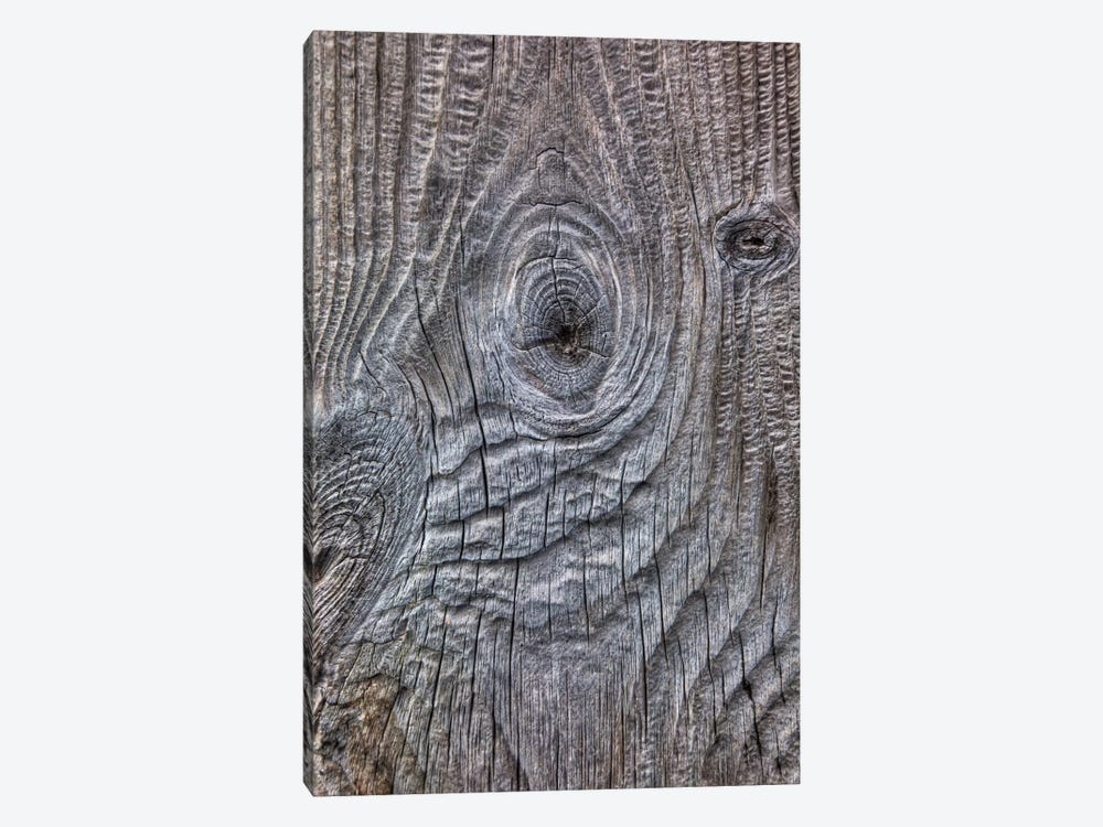 Wind Eroded Wood, Deception Island, South Shetland Islands, Antarctica by Colin Monteath 1-piece Canvas Art