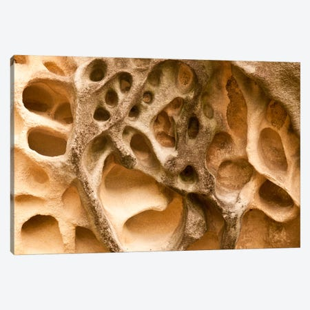 Cavernous Weathering In Sandstone Rock, Sydney, Australia Canvas Print #COL9} by Colin Monteath Canvas Art