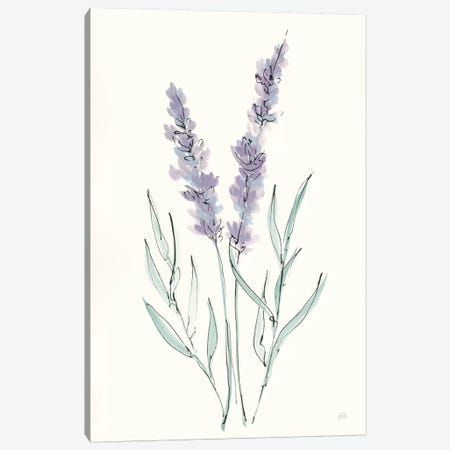 Lavender III Canvas Print #CPA123} by Chris Paschke Art Print