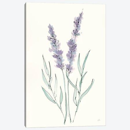 Lavender III Canvas Print #CPA123} by Chris Paschke Art Print