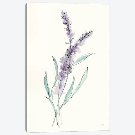 Lavender IV Canvas Print #CPA124} by Chris Paschke Canvas Art
