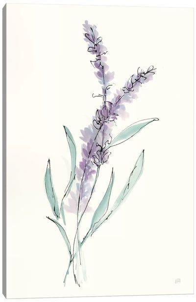Lavender IV Canvas Art Print