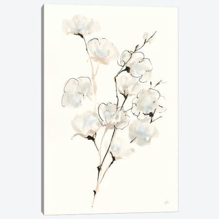 Summer Cotton III Canvas Print #CPA127} by Chris Paschke Canvas Art