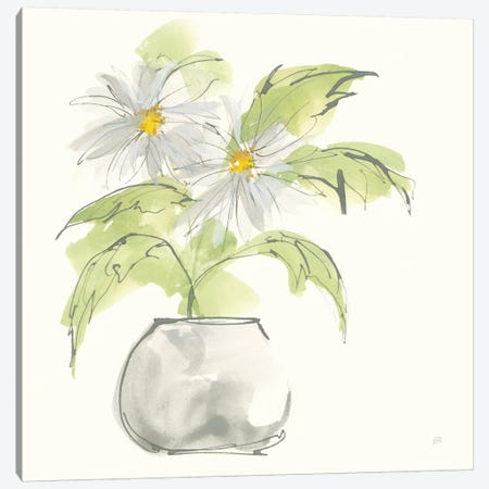 Plant Daisy I Canvas Print #CPA147} by Chris Paschke Canvas Art