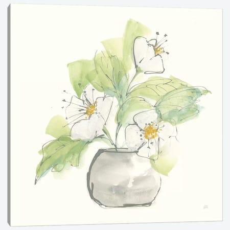 Plant Poppy I Canvas Print #CPA151} by Chris Paschke Canvas Artwork