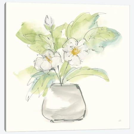 Plant Poppy II Canvas Print #CPA152} by Chris Paschke Canvas Wall Art